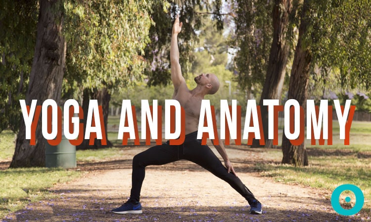 yoga-and-anatomy