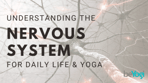 The Sympathetic and Parasympathetic Nervous Systems (in daily life & yoga)